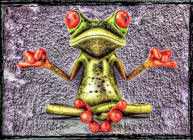 frog-885732_640