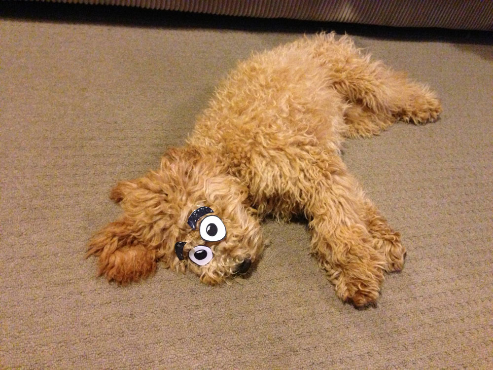 Actually yes, that looks just like Ralph the Dog from the Muppets.