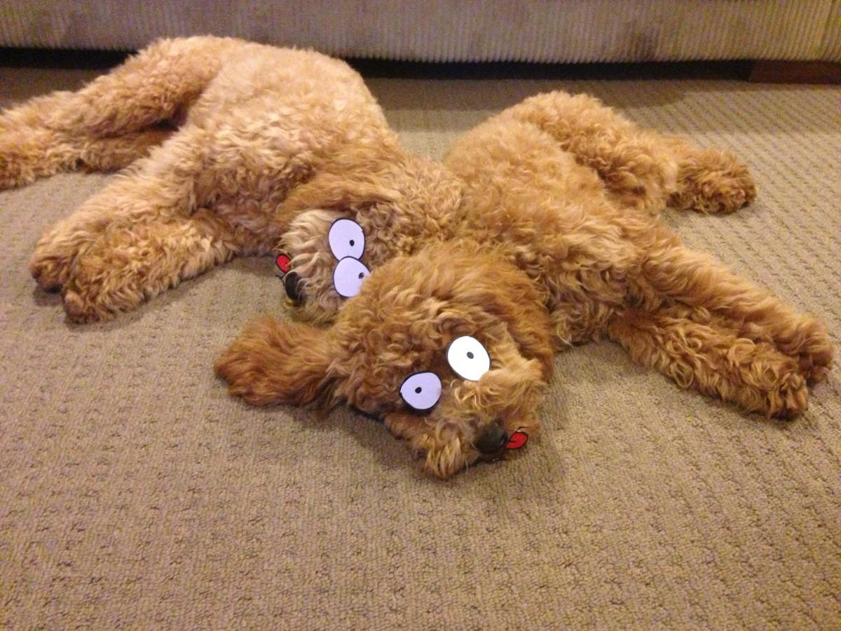Two sleeping dogs...TWICE THE FUN!